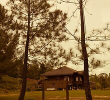House of Bengkirai Forests Borneo by PutroGraph