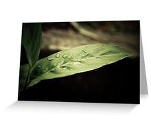 Nature Purity After Rain Greeting Card