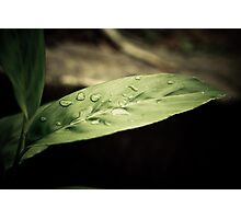 Nature Purity After Rain Photographic Print