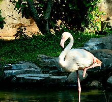 Elegant White Flamingo by PutroGraph