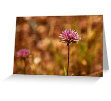 Purple Pilbara Flower Greeting Card