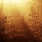 16.5.2013: Spring Morning I by Petri Volanen