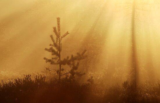 16.5.2013: Spring Morning II by Petri Volanen