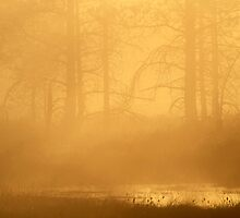 16.5.2013: Spring Morning IV by Petri Volanen