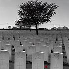 War Graves, Belgium by Mandy  Harvey