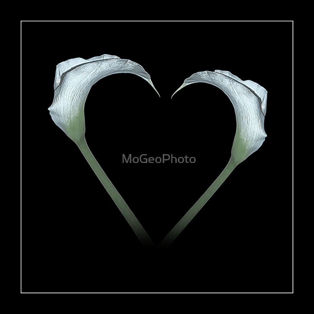 Love Lillies by MoGeoPhoto