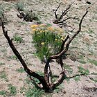 """Burnt Out"" on Peterson Mountain,Reno Nevada USA by Anthony & Nancy  Leake"