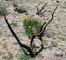 """""""Burnt Out"""" on Peterson Mountain,Reno Nevada USA by Anthony & Nancy  Leake"""