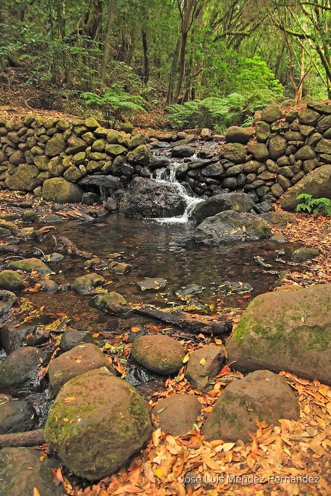 shy brook by Atman Victor