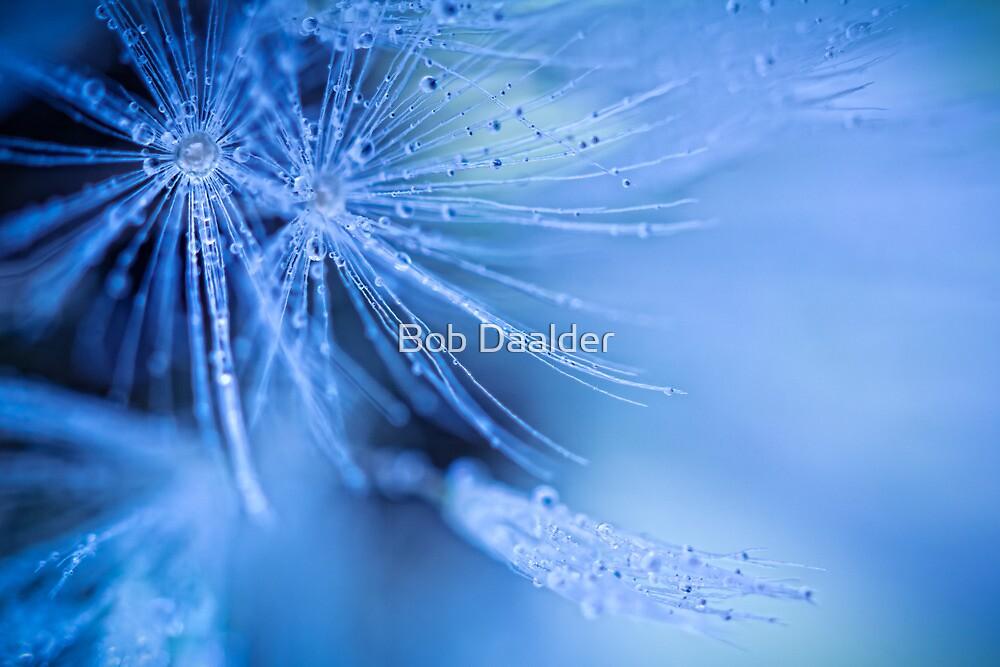 Dandelion fluff by Bob Daalder