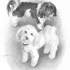 Havanese dogs drawing by Mike Theuer