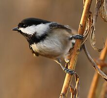 Delicate Perch by Wolf Read