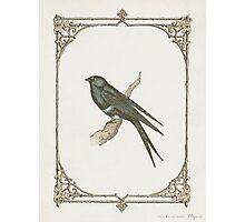 A Victorian Bird Photographic Print