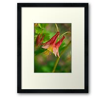 Single Red & Yellow Flower Macro Framed Print