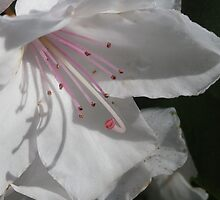 A Rhody Waking Up by Pat Yager