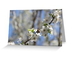 Blossoming tree of plum Greeting Card