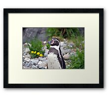 Penguin lookout Framed Print