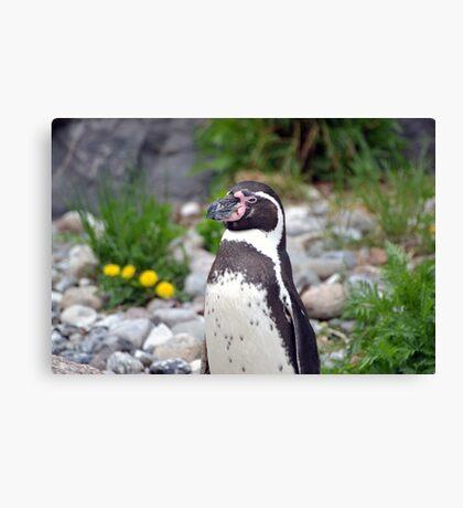 Penguin lookout Canvas Print