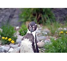Penguin spotted me Photographic Print