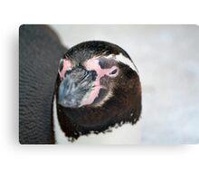 Penguin suspicious Canvas Print