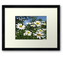a lot of white beautiful chamomiles Framed Print