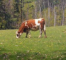 Our Neighbor - Bessie the Cow by teresa731