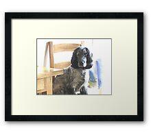 SPECIAL DOG Framed Print