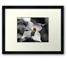 Ladybug On Dogwood Flower In Black And White Partial Color Framed Print