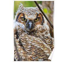 Horned Owl - Ottawa, Canada Poster