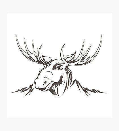 Moose head Photographic Print