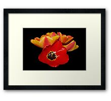 tulips shining bright Framed Print