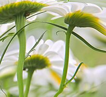 Wind Swept by NatureGreeting Cards ©ccwri