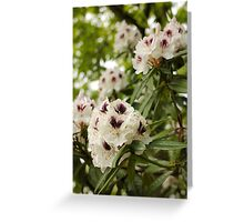 Purple Freckles Greeting Card