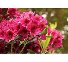 Resplendent With Magenta and Red Photographic Print
