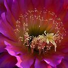 Perfectly Pink  by Saija  Lehtonen