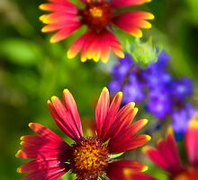 The Colors of Summer  by Saija  Lehtonen