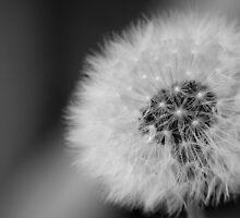 dandelion Clockwork by David Moby
