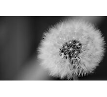 dandelion Clockwork Photographic Print