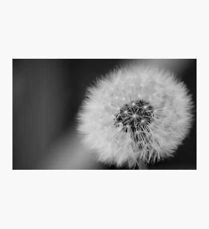 dandelion Clockwork Photographic Print