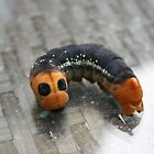 Oleander Hawk Moth Larvae by taiche