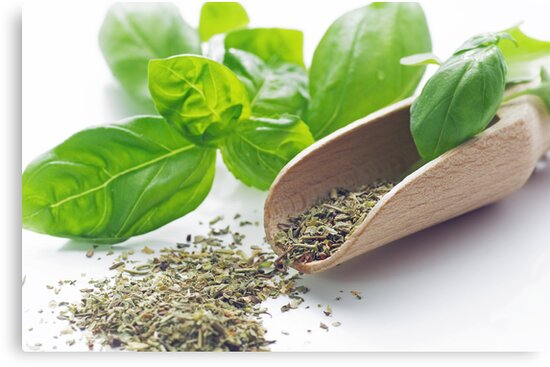 Fresh basil herbs for the kitchen by Aviana
