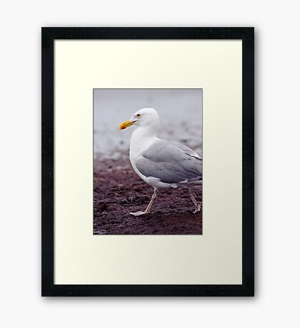 Marching Seagull Framed Print
