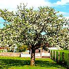 ...why do birds sing...APPLETREE in full bloom by The Creative Minds