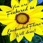 *Yellow Daisy Banner* by EdsMum