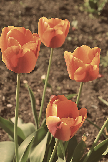 One Spring Morning by BirgitHM