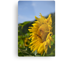 Bee Sunny Metal Print