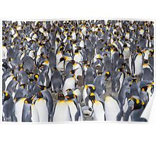 Penguins as far as the eye can see! (plus one chick...) Poster