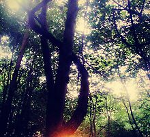 sun in forest by Jenyvive