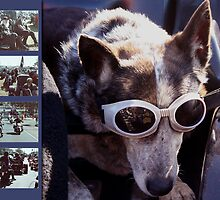 Just call me Dog by Linda Lees