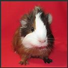 Guinea Pigs Rabbits & Small Pets (**NO** images of Guinea Pig as a Delicacy)